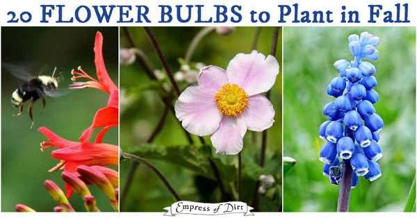 Flower bulbs to plant in fall.