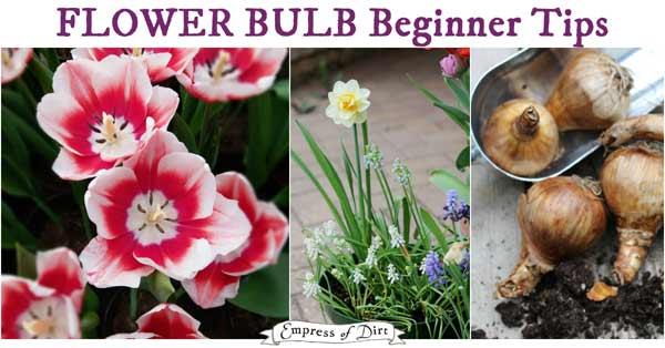 Flower bulb planting tips for beginners