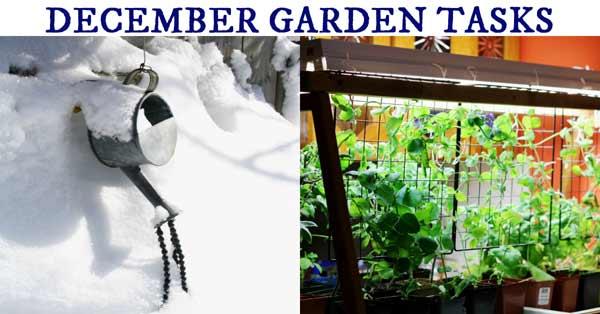 December Garden Tasks