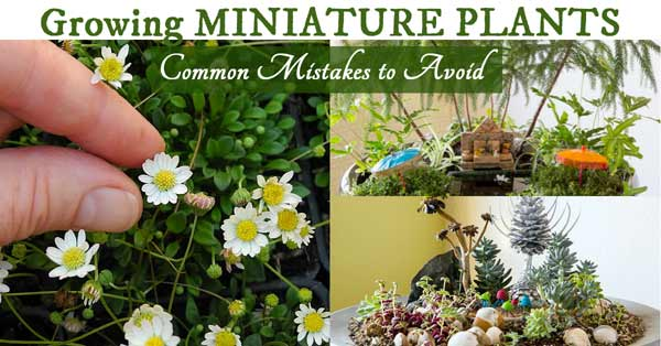 Growing Miniature Plants - Common Mistakes to Avoid