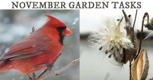 November Garden Tasks