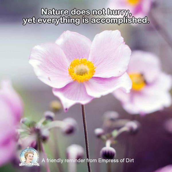 Nature does not hurry yet everything is accomplished.