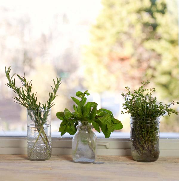 Herbs to regrow from cuttings. Photo by Kirsten Boehmer.