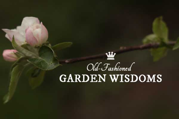 Old-Fashioned Garden Wisdoms