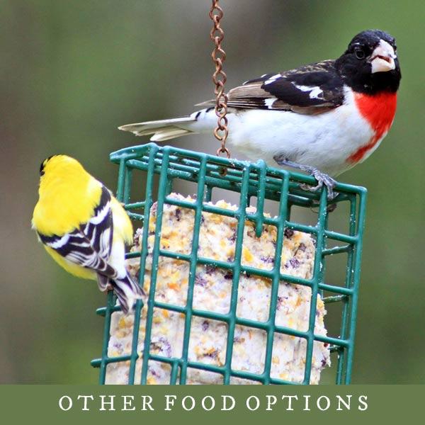 Evening grossbeak and goldfinch birds on suet feeder