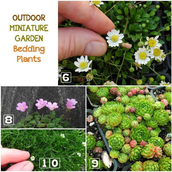 Learn how to choose the best plants for your outdoor miniature garden.