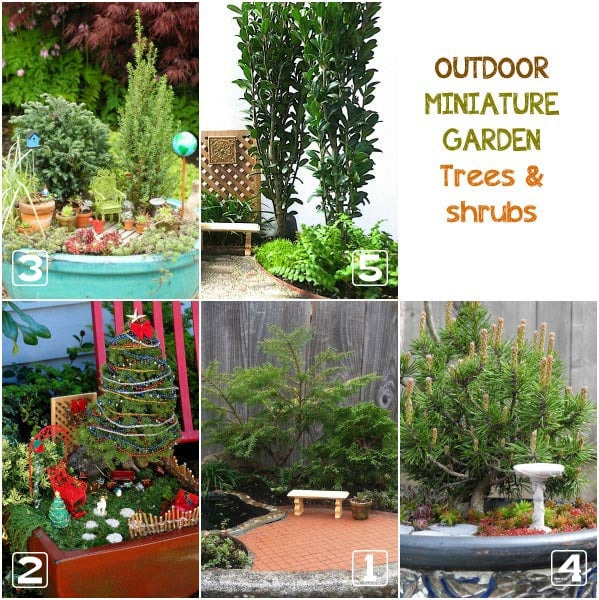 Outdoor miniature trees and shrubs.