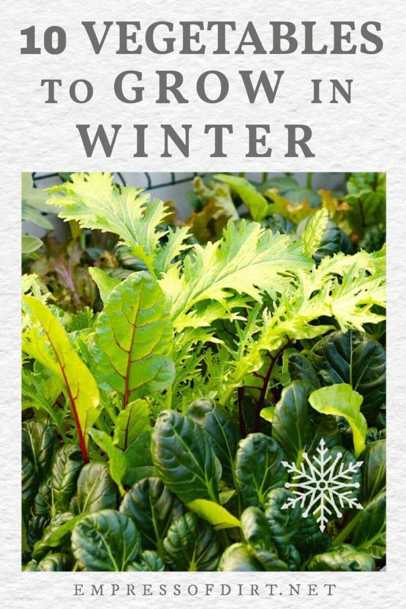 Winter vegetables including leafy greens.