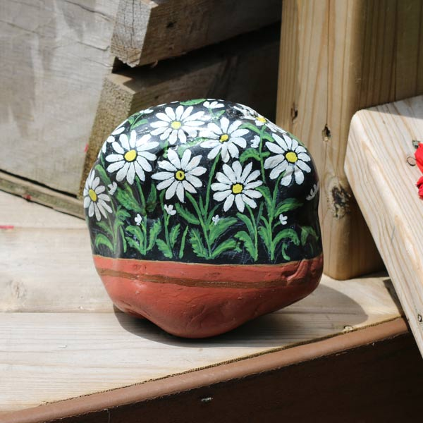 Painted Daisy Rock