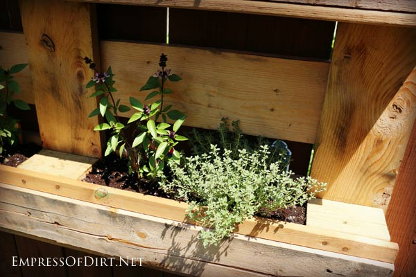 Pallet herb garden - grow a herb garden on your garden fence!