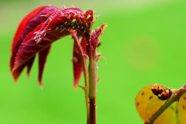 Common Garden Pests and Their Natural Controls Empress of Dirt