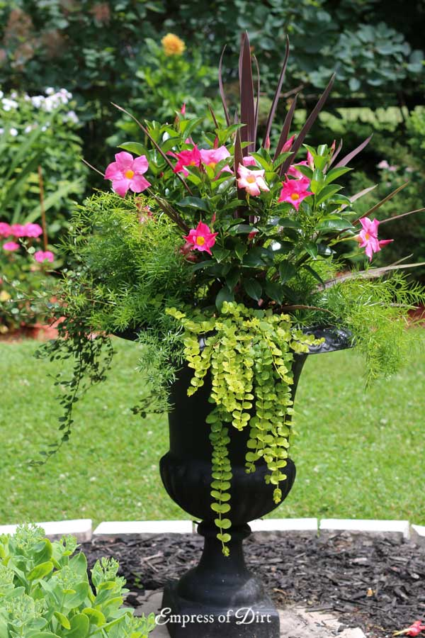 Big garden urn with bright pink flowers.