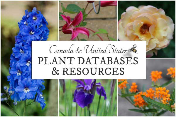 Plant Databases and Resources for Canada and the United States
