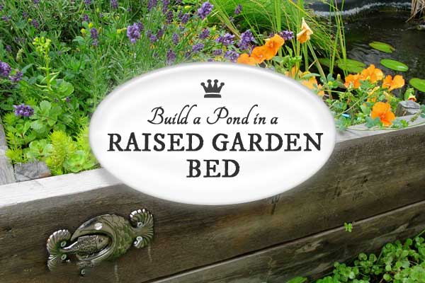 DIY Build a Garden Pond in a Raised Bed