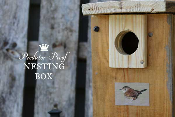 Predator-proof nesting box