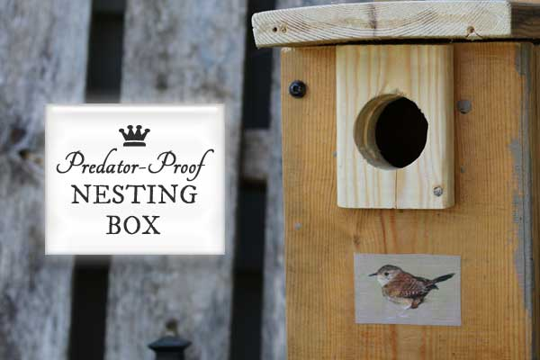 Add a predator block to keep your nesting birds safe