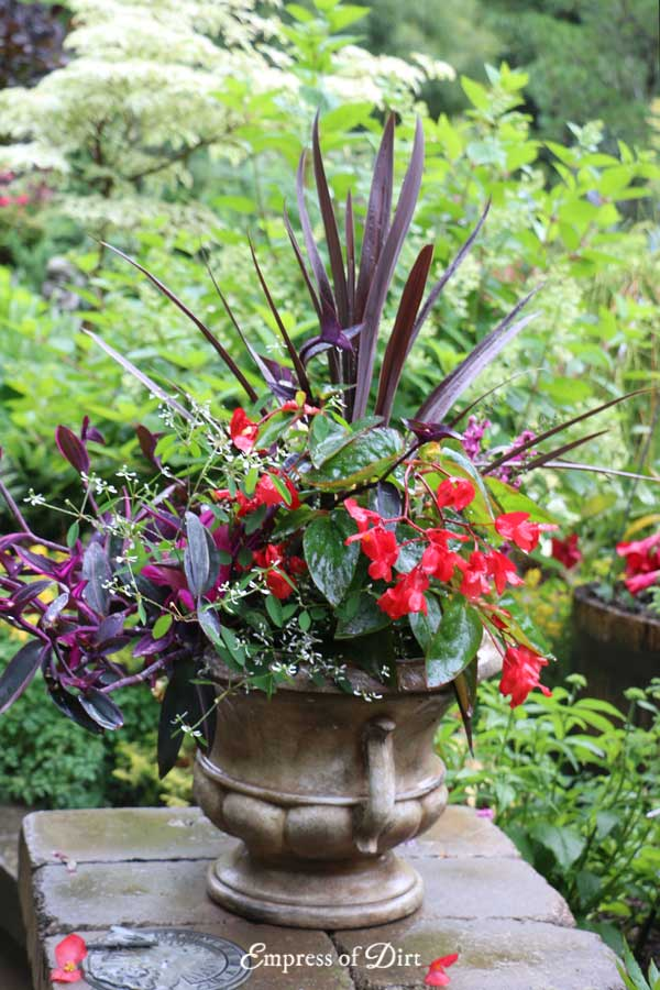 Flower pot with red and purple blooms.