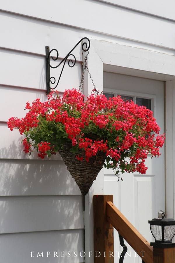 A gorgeous sea of red flowers hanging by the back door.