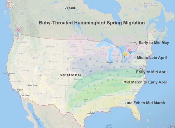 Hummingbird spring migration dates.
