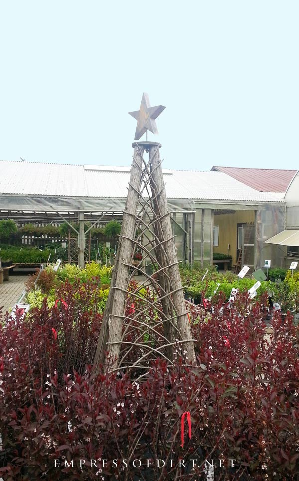 Rustic garden obelisk made from rough cedar posts with star on top.