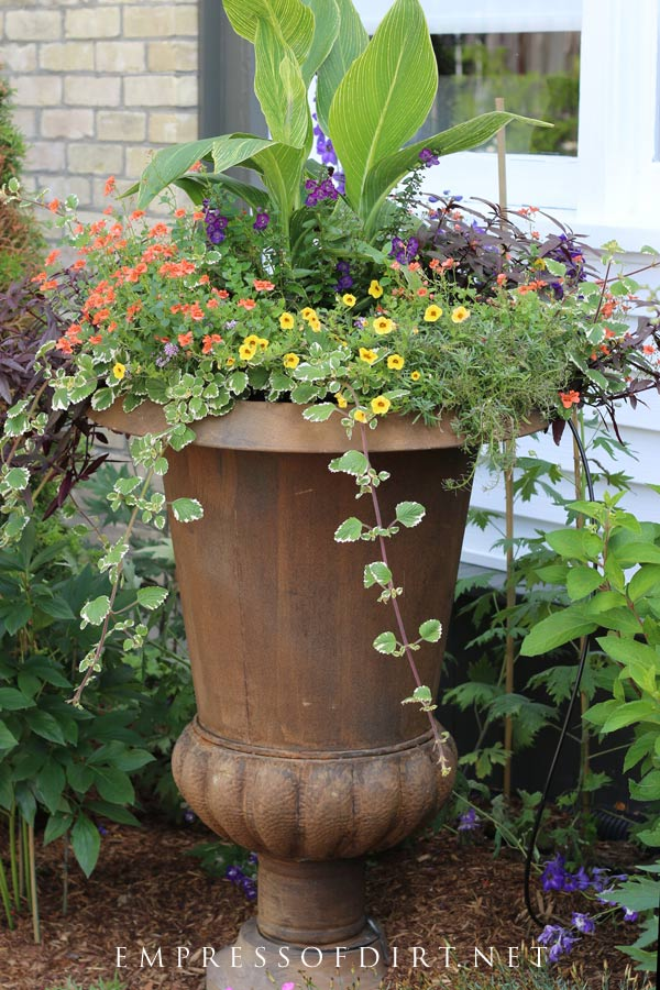 Tropical leaves and trailing flowers and vines fill this rusty urn.