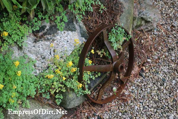 Rusty old wheel as garden art.