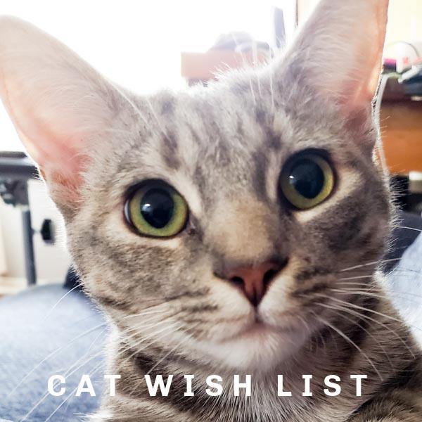 Molly the Cat has a wish list.