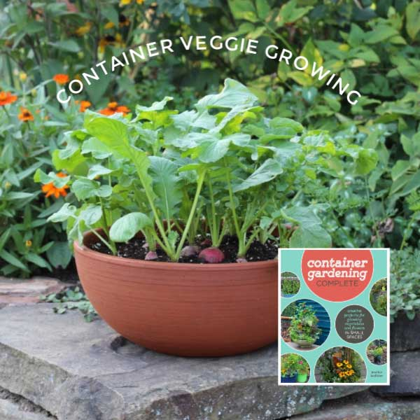 How To Grow Vegetables In Containers Start Here Empress Of Dirt