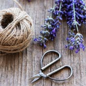 Lavender, twine, and scissors