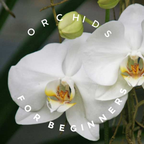 Orchids For Beginners Empress Of Dirt