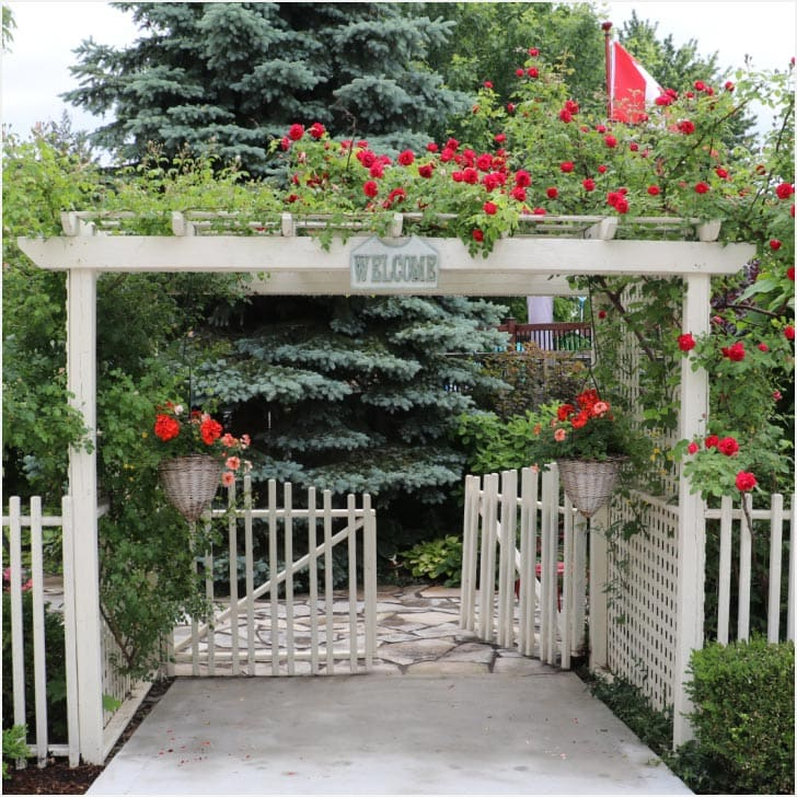 White garden fence with rose arbor over top.