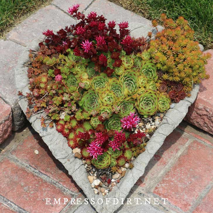 Heart-shaped hypertufa planter with succulents
