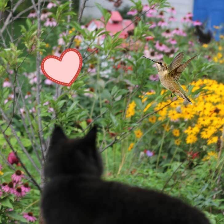 Cat sitting by patio window while hummingbird flutters nearby.