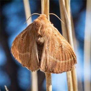 Moth resting on plant stem.