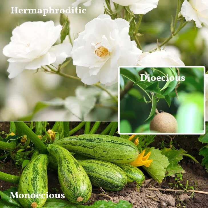 Examples of different plant groups including roses, kiwi, and zucchini.