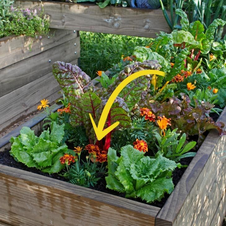 Vegetable garden in a raised bed with marigolds