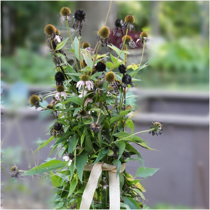 Seed pod bouquets in the garden.