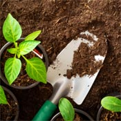 Garden trowel, plant, and potting mix.