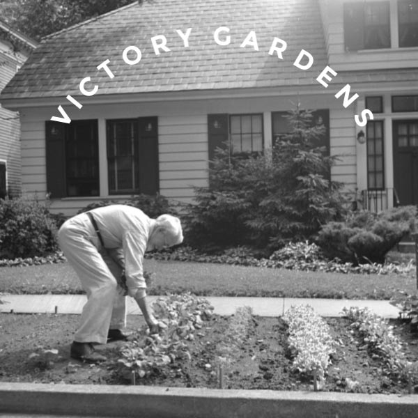 Man growing vegetables at front of house in 1940s victory garden.