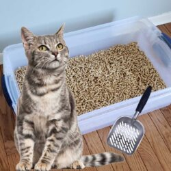 Cat and sifting cat litter box with scoop.