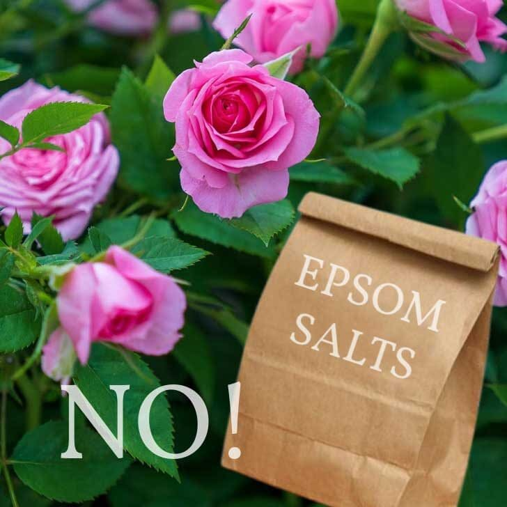 Pink roses and bag of Epsom salts.