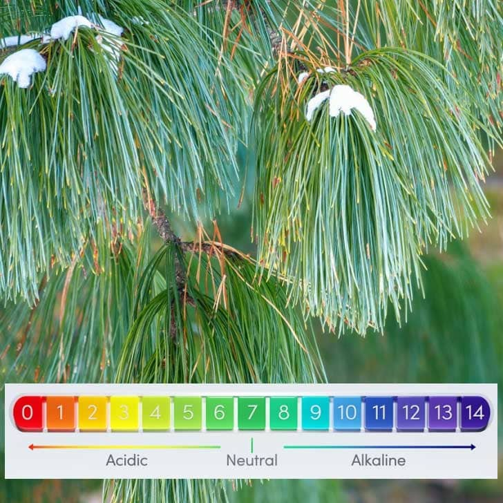 Pine needles and pH measurement chart.