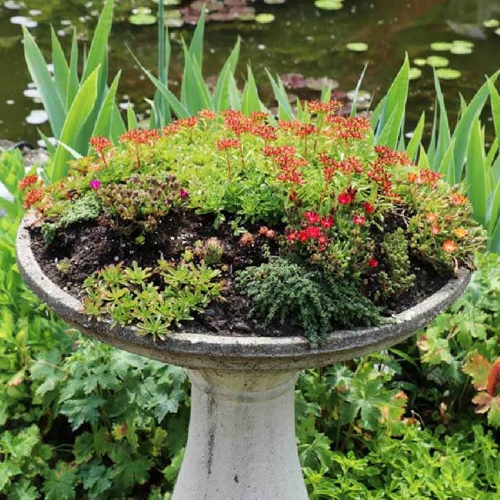 Birdbath turned into a flower planter in the garden.