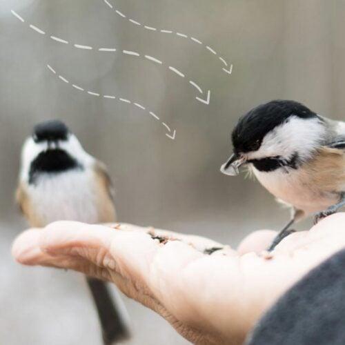Hand feeding wild birds.