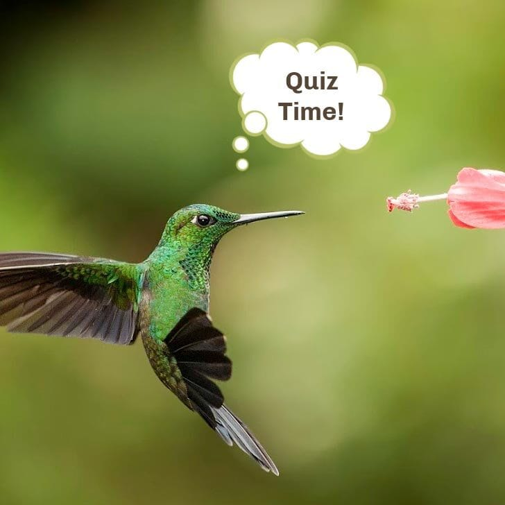 Do you know hummingbirds? Take the quiz and find out