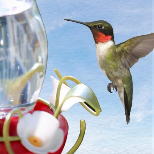 Ruby-throated hummingbird flying toward sugar water feeder.