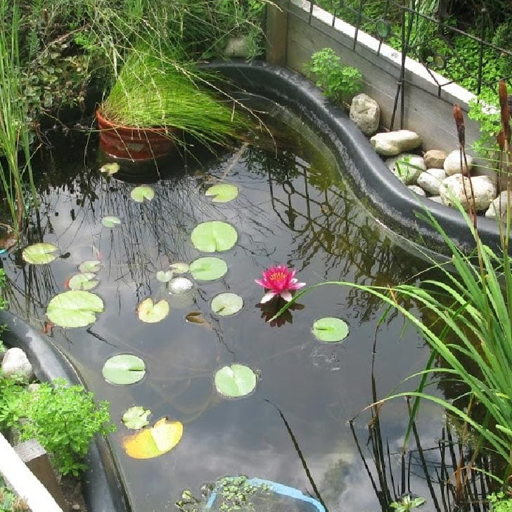 Small garden pond built in a raised garden bed.