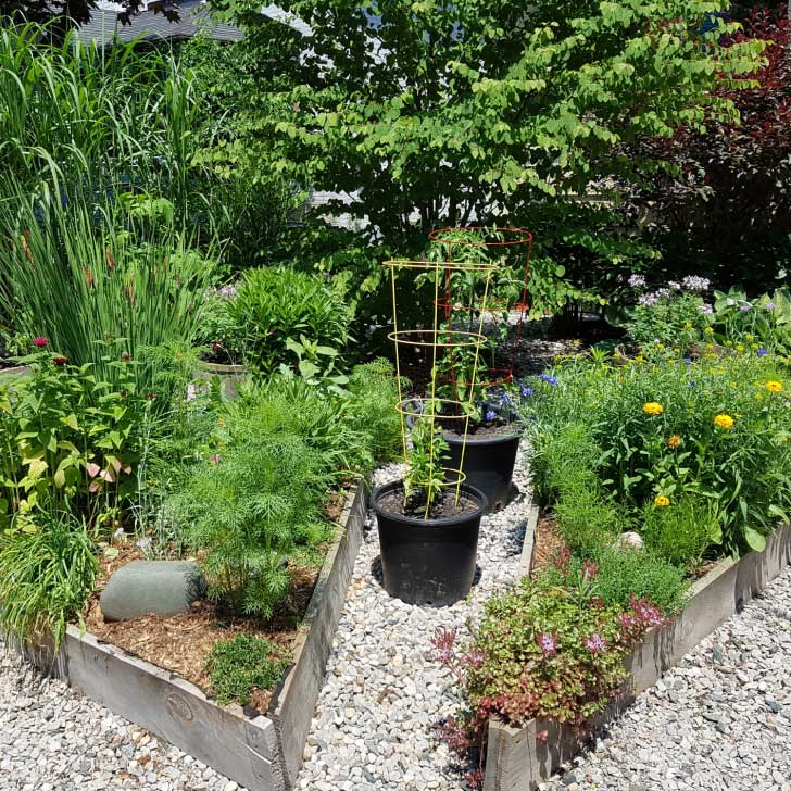 Raised garden beds with plants and vegetables.