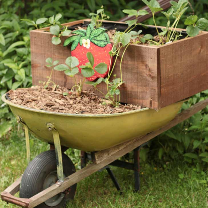 Wheelbarrow planted with strawberries and a hand-painted image of a large strawberry.