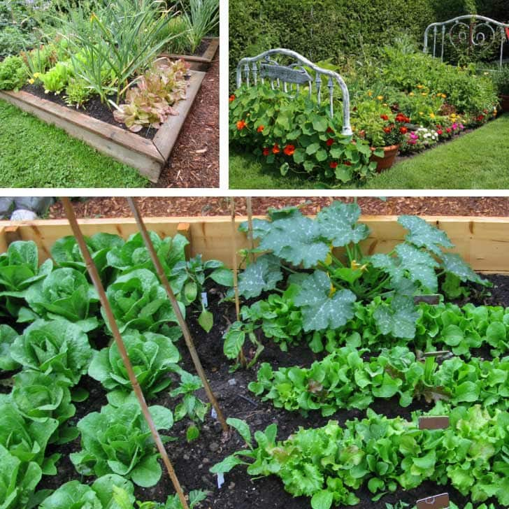 Examples of vegetable garden layouts.
